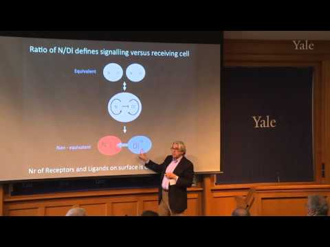 "Spyros Artavanis-Tsakonas, ""A Notch Signaling Story: It All Started at Yale"""