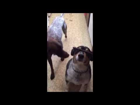 Dog Steals Treat Off Other Dog's Nose