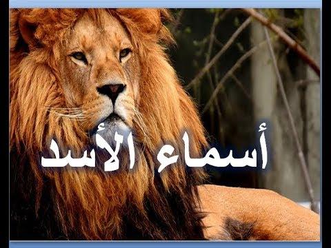 تعلم اسماء الاسد مع النطق الصحيح لها