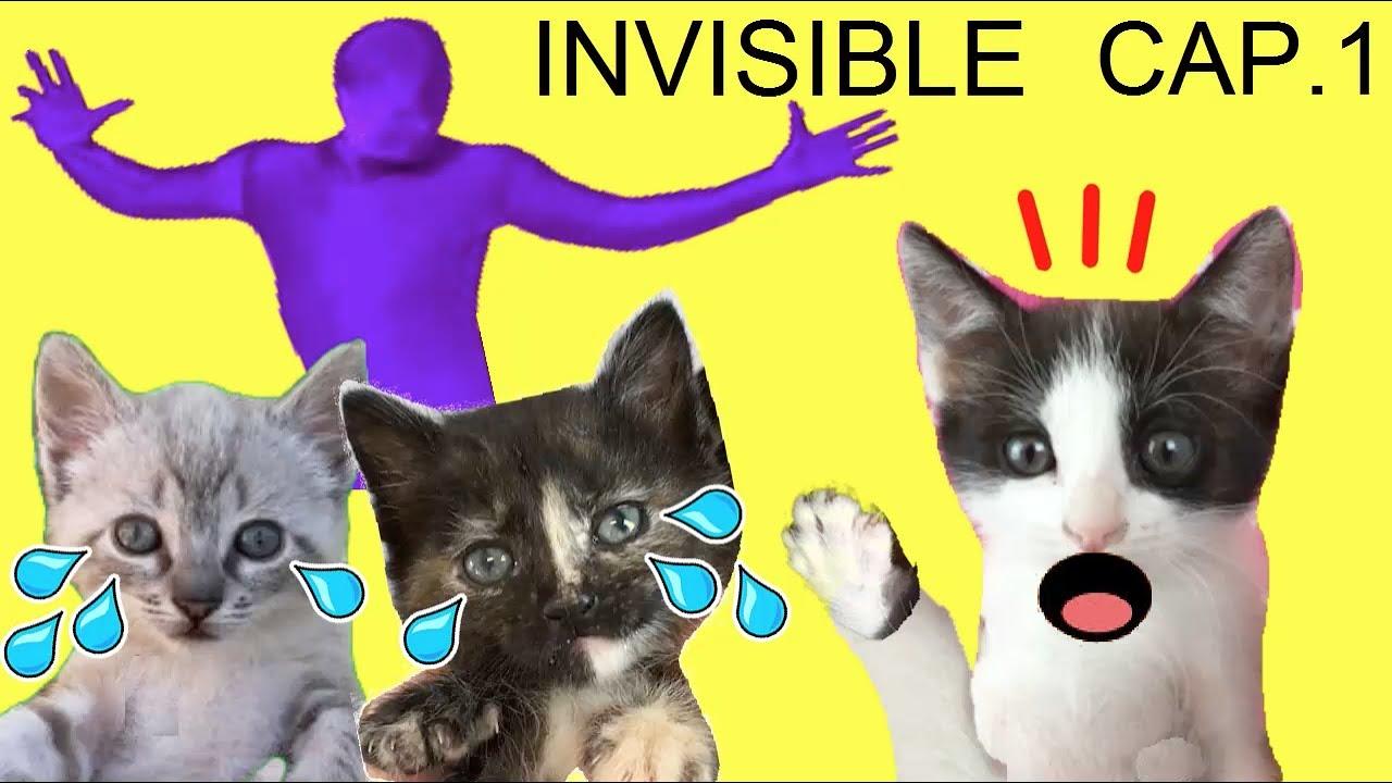 El hombre invisible me roba a los nuevos gatitos de mis gatos Luna y Estrella / CAP 1 de la serie