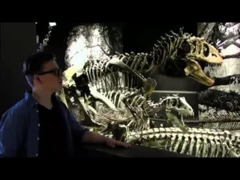 Why Fossils Matter