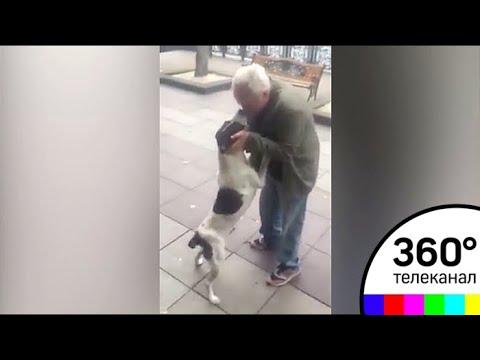 Дедушка из Грузии нашёл своего пса спустя 3 года