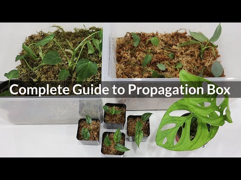 Successfully Grow Houseplants from Cuttings   Propagate Indoor Plants