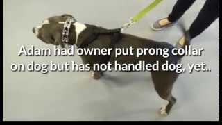 Reno, Nv Dog Training Expert Immediately Stops Aggressive Pit Bull Barking