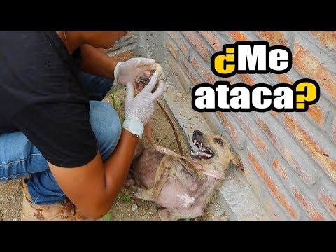 No creerás COMO REACCIONA un perro de la calle al ser acariciado por primera vez *FINAL INESPERADO*
