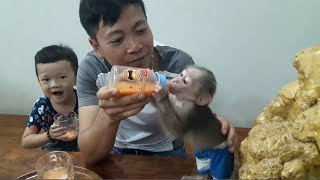 Baby Monkey Doo And Family / Carrot Juice - Funny Animals
