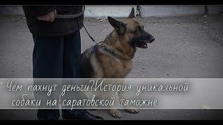 Чем пахнут деньги? История уникальной собаки на саратовской  таможне