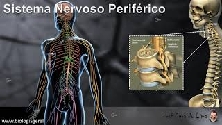 Sistema Nervoso 4 - Sistema Nervoso Periférico
