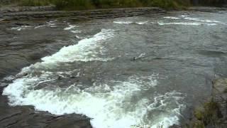 Salmon Run, Port Hope, Ontario, Canada