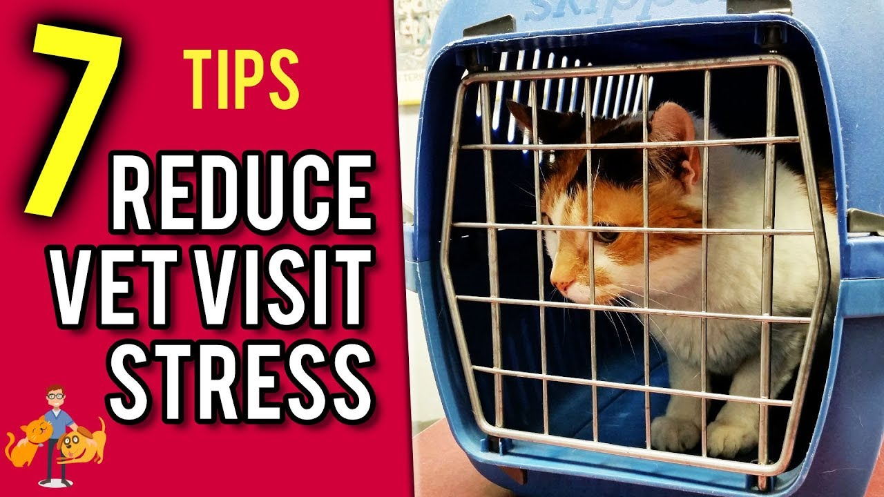reducing cat stress during veterinary visits - 1280×720