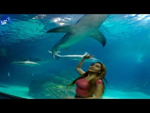 CAMDEN ADVENTURE AQUARIUM EXPERIENCE/SHARKS