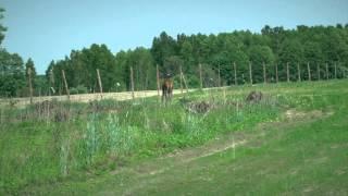 Ludzie wydobyli byka z pułapki - www.pulsmiasta.tv