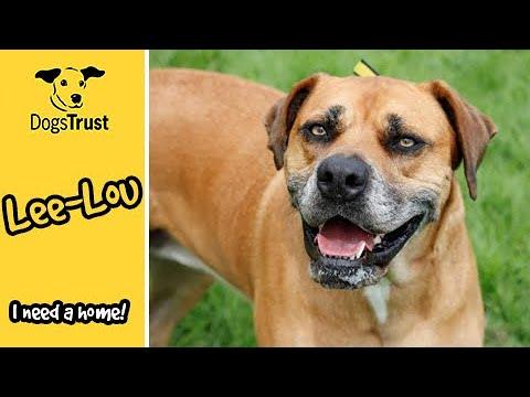 Meet LeeLou! | Dogs Trust Bridgend