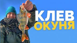 КЛЕВ ОКУНЯ СО ЛЬДА Рыбалка в Киеве Ловля на мормышку с мотылем