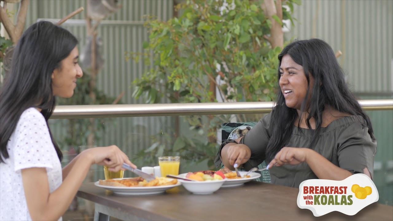 video Wildlife Sydney Zoo Breakfast With The Koala