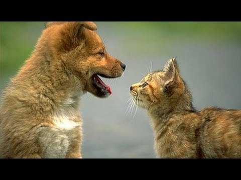 I nostri amici animali cani gatti e video divertenti for Youtube cani e gatti