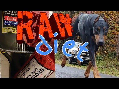 Doberman Pinscher Raw Diet - Learning How to Feed my Dog RAW FOOD
