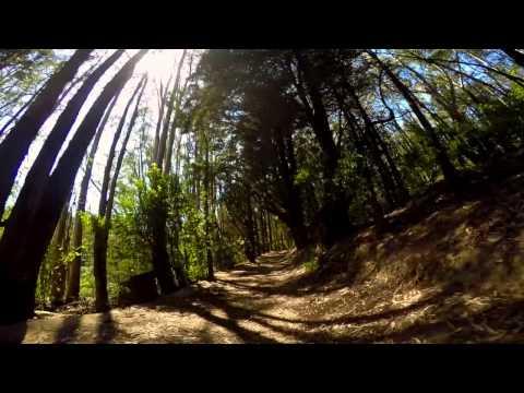 Running Redwood Regional Park Oakland, CA