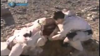 как режут верблюда и укрываются в нём
