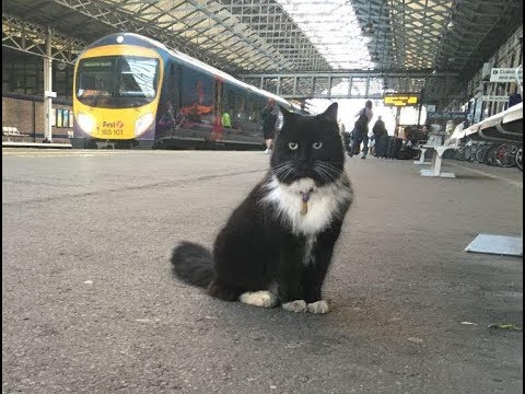 This Little Cat Found Shelter In A Train Station  5 Years Later She Got The Purr fect Promotion