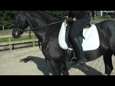 How long should the stirrups be? (foot position in stirrup) – YRS TV Episode 52