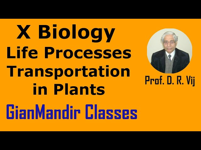 X Biology - Life Processes - Transportation in Plants by Manjit Mam