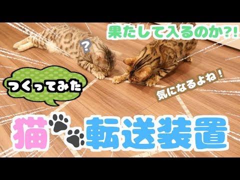 床に猫を呼び寄せる転送装置を作ったら猫たちの反応が。。。