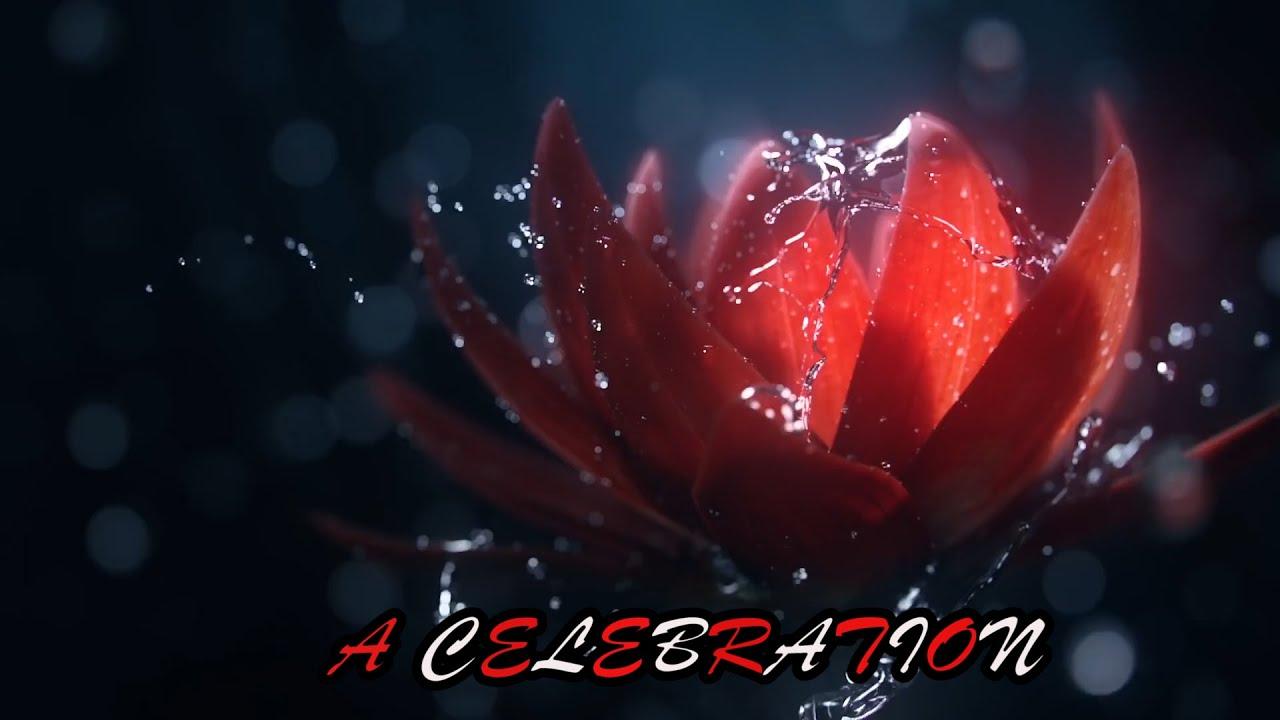 13, Life Is A Celebration
