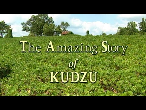 The Amazing Story of Kudzu - 1996 Documentary