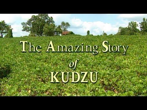 The Amazing Story of Kudzu - 1996 Documentary