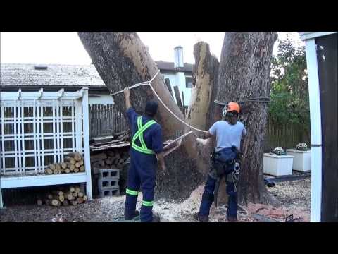 Day in the life 2, Tree-Crane work. HD. Tree services Victoria BC