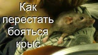 Как перестать бояться крыс
