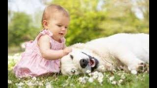 説明文 犬と赤ちゃんの可愛い絡みシーンを集めました!思う存分癒されて...