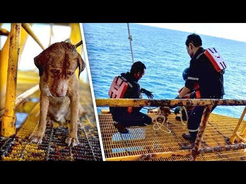Lance Houston - Dog Rescued from the Ocean, 136 Miles from Shore