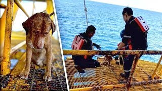 Dog Found Swimming 136 Miles From Shore