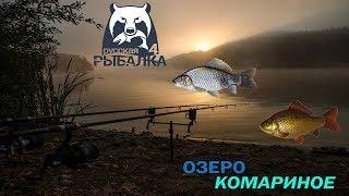 Російська рибалка 4   Фідер+Поплавок - Полювання на Коропа і Амура продовження