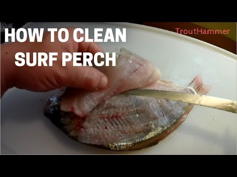 How to Clean and Filet Surf Perch