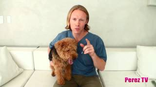 How To Reduce Your Pet's Stress!