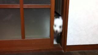 「チャンネル登録」お願いします(^-^)/ 自分の前足で、扉を開いて入って...