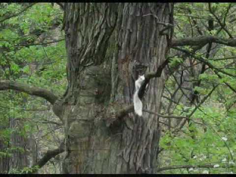 Wonderful World, nature photography slideshow