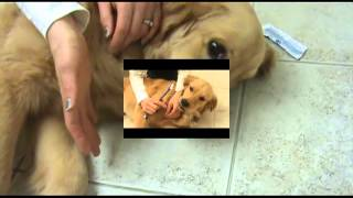How To Brush Your Dogs' Teeth - At Upper Canada Animal Hospital