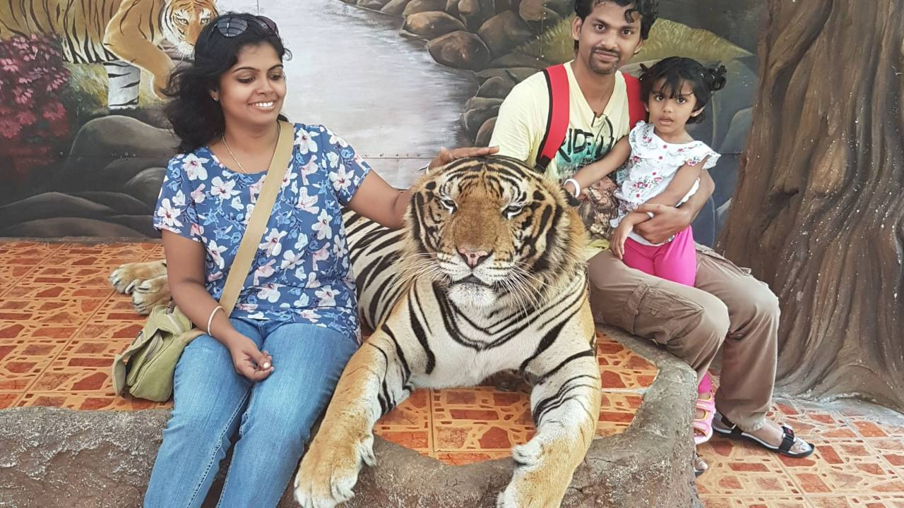 Walk with Amaya - Sriracha Tiger Zoo, Pattaya (4K) - YouTube