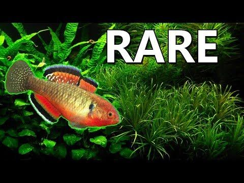 5 RARE Aquarium Fish