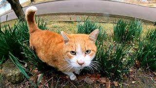 坂の上によく喋る野良猫がいたので登ってナデナデしてきた