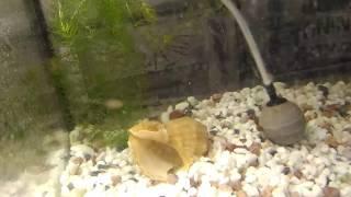 Что это в аквариуме, похоже на  мини пиявку, подскажите что делать?
