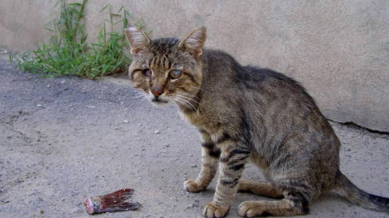 аудио запись уродливый кот ссоры батей: