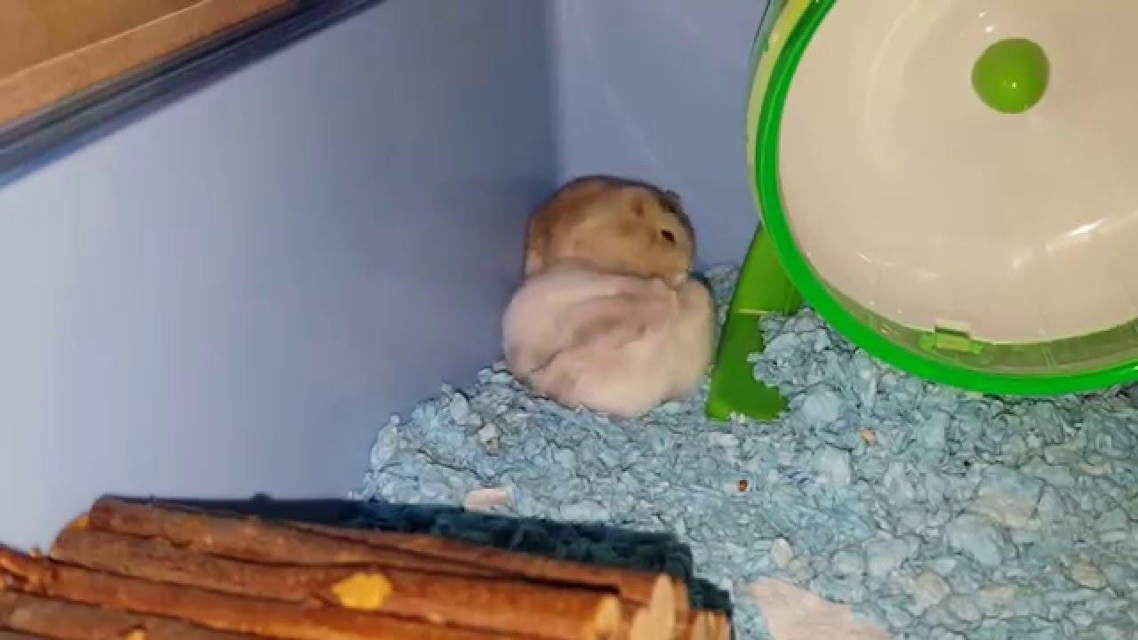 Spiel Hamster