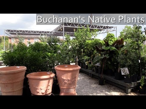 Buchanan's Native Plants in The Heights