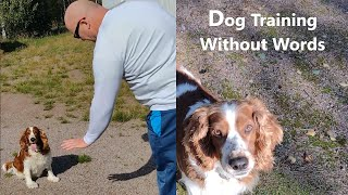 Nonverbal Communication: Guiding a Dog with Gestures   Welsh Springer Spaniel Training