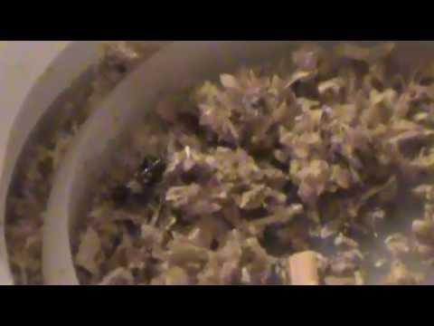 Cr a de grillos en cautiverio alimento para mascotas for Cria de peces en cautiverio